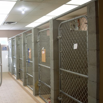 All of our large dog patients are kept comfortable in our spacious runs.