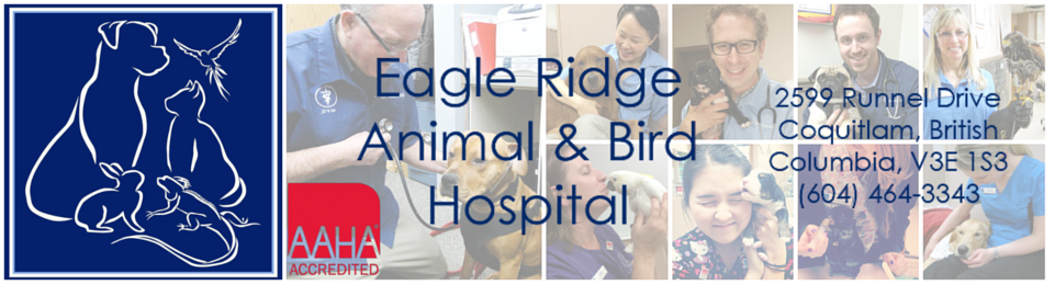 Logo for Eagle Ridge Animal and Bird Hospital in Coquitlam, BC
