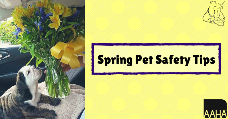 Spring Pet Safety Tips