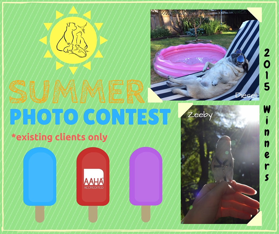 SUMMER PHOTO CONTEST 2016 (5)