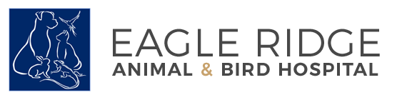 Eagle Ridge Animal and Bird Hospital in Coquitlam, BC